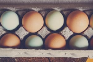 Why You Should Eat 5 Eggs Every Morning